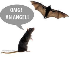Made in DNA sees a bat & says, OMG, an angel!